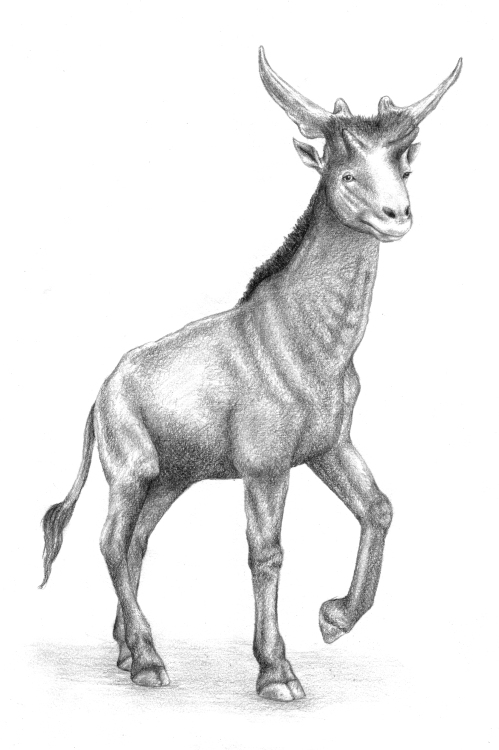 Illustration from the book, showing how the whole sivathere may have looked