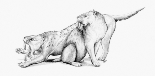 Illustration from the book showing how the pouch-knife may have looked in life. It was about as large as a modern-day jaguar (Renata Cunha)