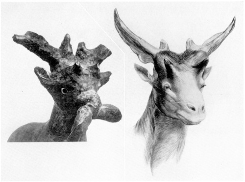 Close up of the rein-ring animal's head (left) and reconstruction of a sivathere based on fossils. Look at the shape of the horns and the two small horns above the animal's eyes. You can also see the heavy rope attached to the sculpture's snout.